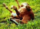 Photo de lov3-horse-pony