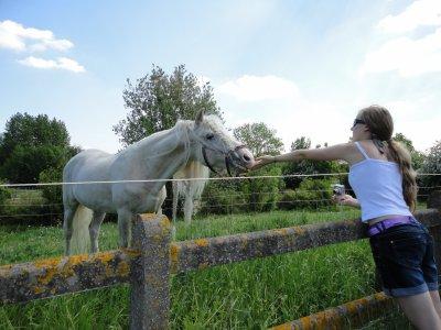 barbie cheval près de chez moi :)