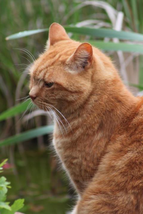 Mon amour, Mon Chat <3