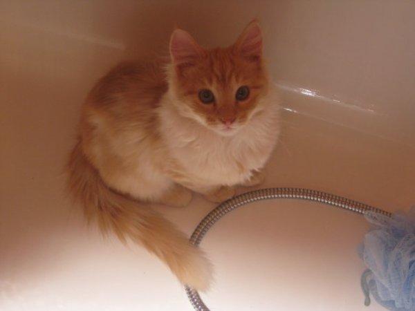 Mon Deuxieme chat <3