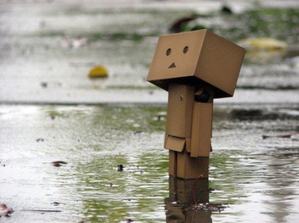 Danbo sous la pluie !