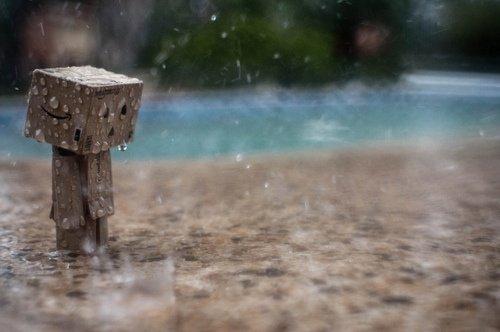 Danbo sous la pluie
