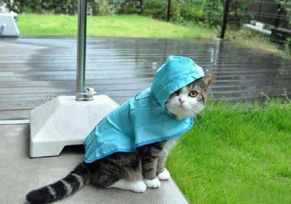 pluie, pluie et encore pluie ...