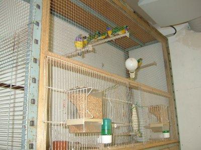 mes cages de preparation avant la repro