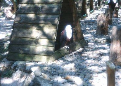Mon voyage au rocher des aigles ( rocamadour)