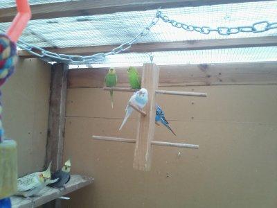 Du nouveau des oiseaux