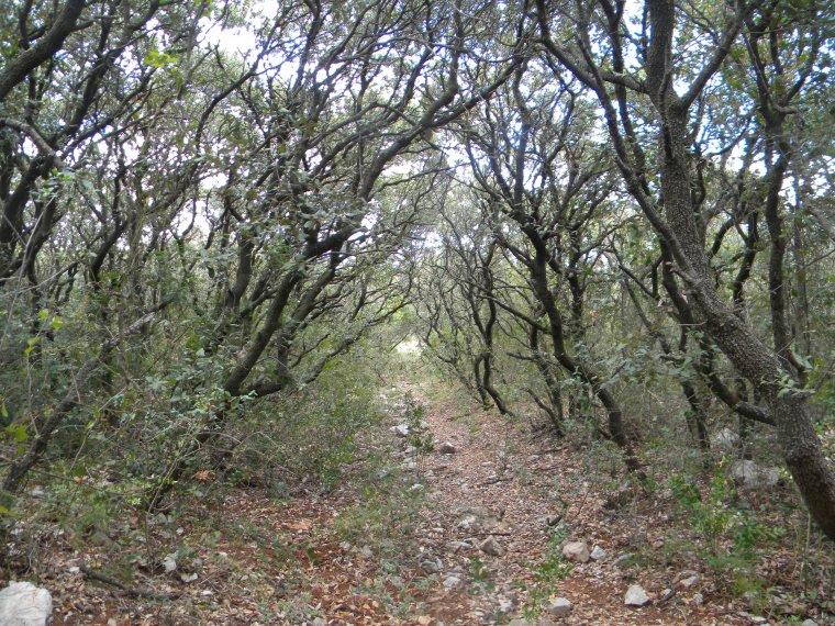le Bois Noir / Massif de la Gardiole