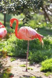 "le Secret du ""Flamant Rose"""
