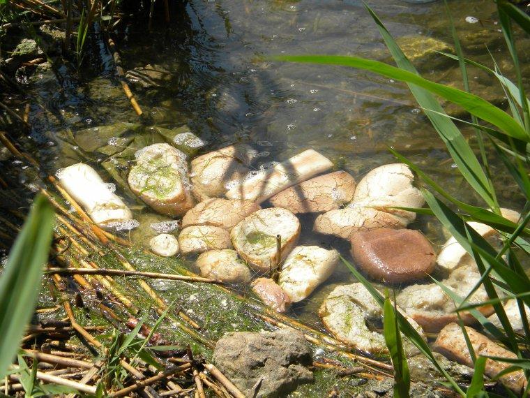 """Le Secret de l'étang de"""" Nahmens"""""""