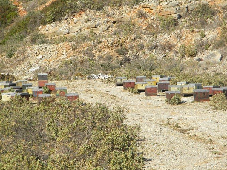 Les Sentinelles de l'environnement