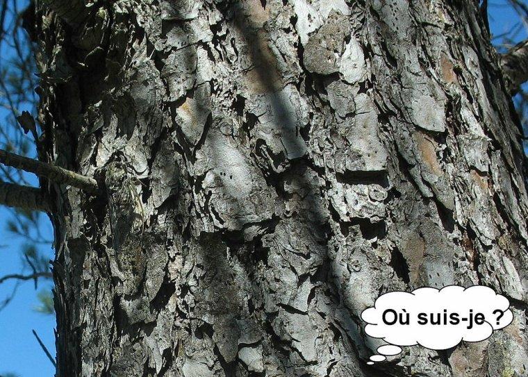 Entre Pierres et Camouflage