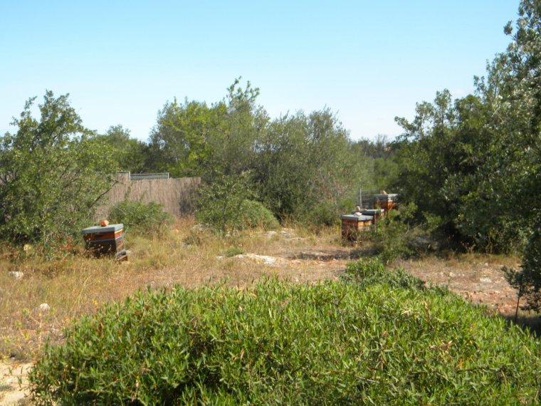 Entre Pierres et ruches Antiques