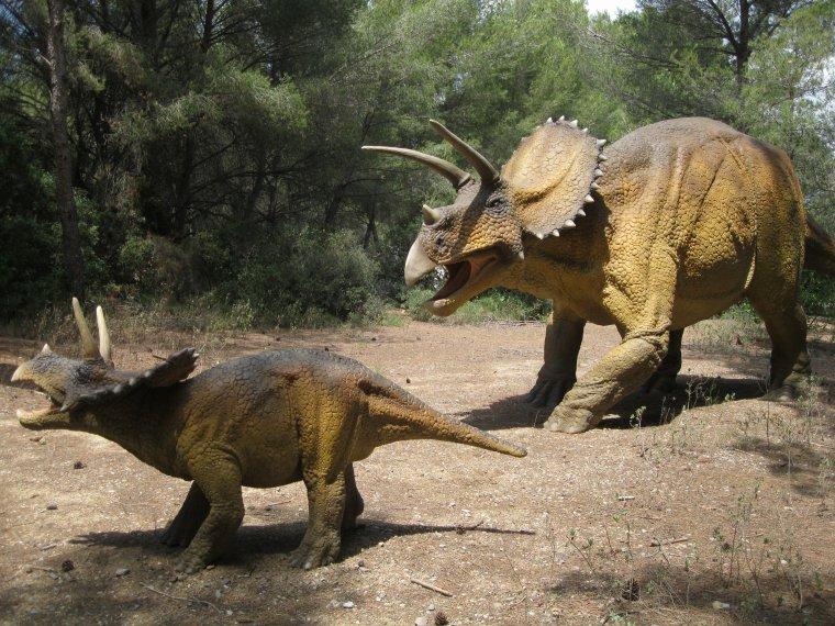 Entre Pierres et Dinosaures