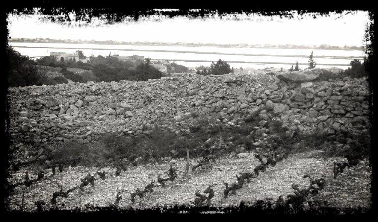 La Taille de la vigne ...en gardiole ,