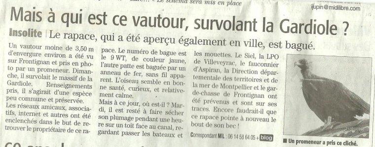 Qui a perdu son Vautour Moine ?