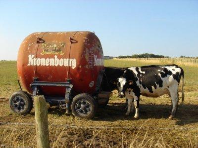 ta dja vu une vache qui boit dla bière xD