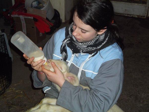 les bonne joie de l'élevage