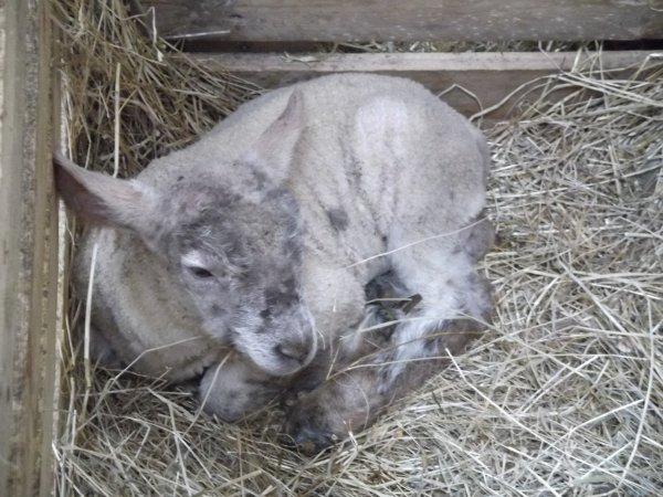 petite boule de laine =P