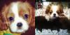 .  20/11/12 : Vanessa a était dans une animalerie et a pris en photos deux petits chiots.   .