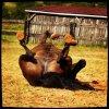Qui n'a pas connu la communion entre l'homme et l'une des plus belles créatures au monde, le cheval, est passé à côté d'une des plus grandes joies de l'existence. Philippe Noiret