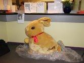 Un lapin géant au restaurant d'entreprise.