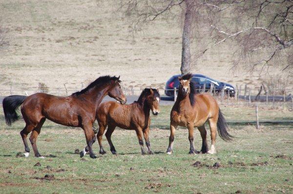 - Ou quand le poney se prend pour un entier -