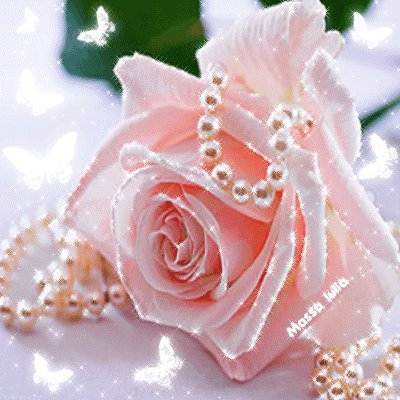 la pureté de cette rose trop belle