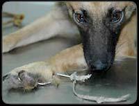 aniimo-loveuz est un blog contre la maltraitance, l'abandon et les experiences cruelles et inutiles faites sur les animaux...