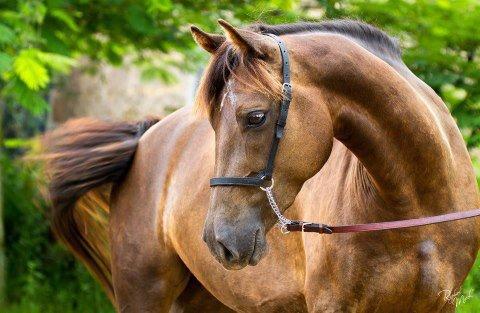 cheval, cheval et encore cheval !!