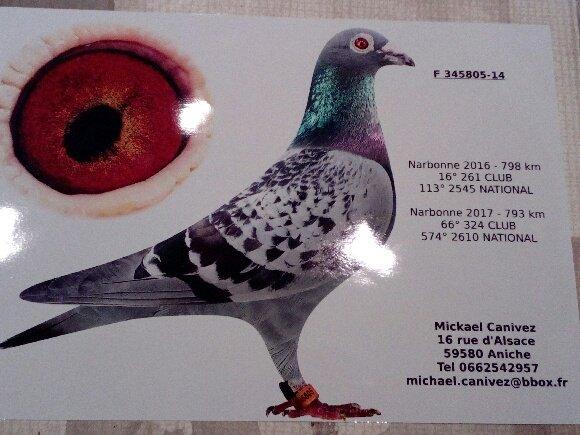 La lignée des pigeons Vitel Eric