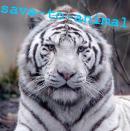 Photo de save-to-animal