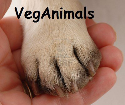 Article n°1 : Bienvenu Sur VegAnimals !