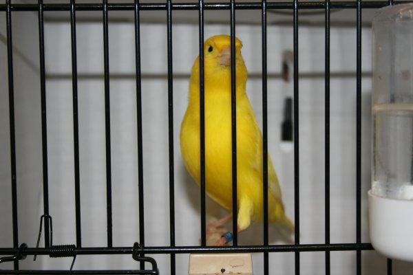 FOCDE 2011