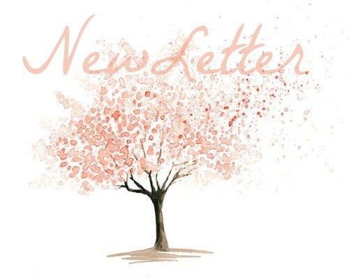 NewLetter ღ