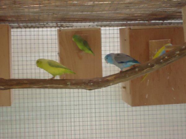 Mes oiseaux (suite 2)