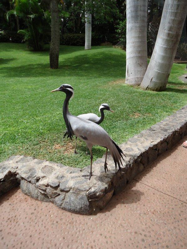 Loro Parque (suite 4)