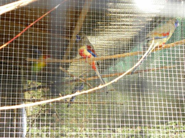 Elevage J.M Bayens (oiseaux)