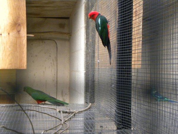 Elevage J.M Bayens (oiseaux suite)