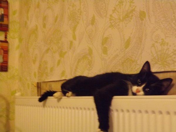 tranquille et posé sur le radiateur bien au chaud, hop un gros dodo zzzzz