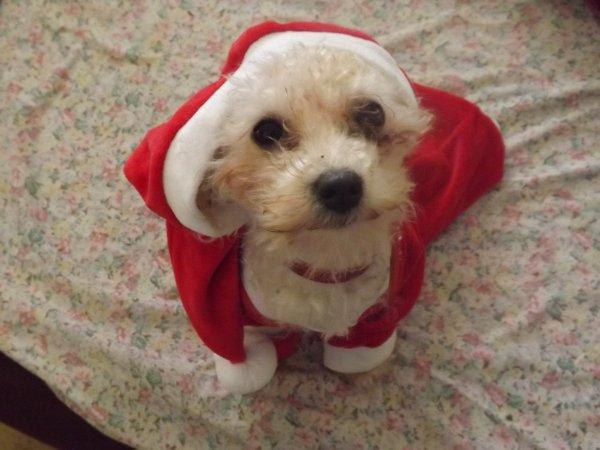Louna le toutou de Noël :)