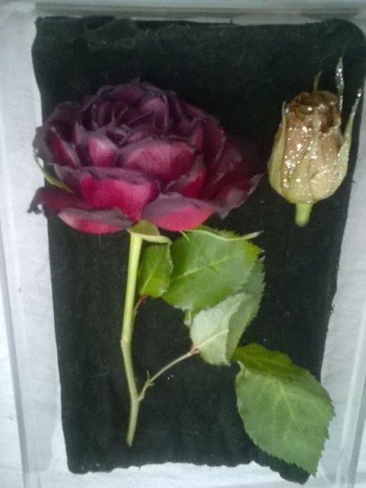 Une rose éternelle