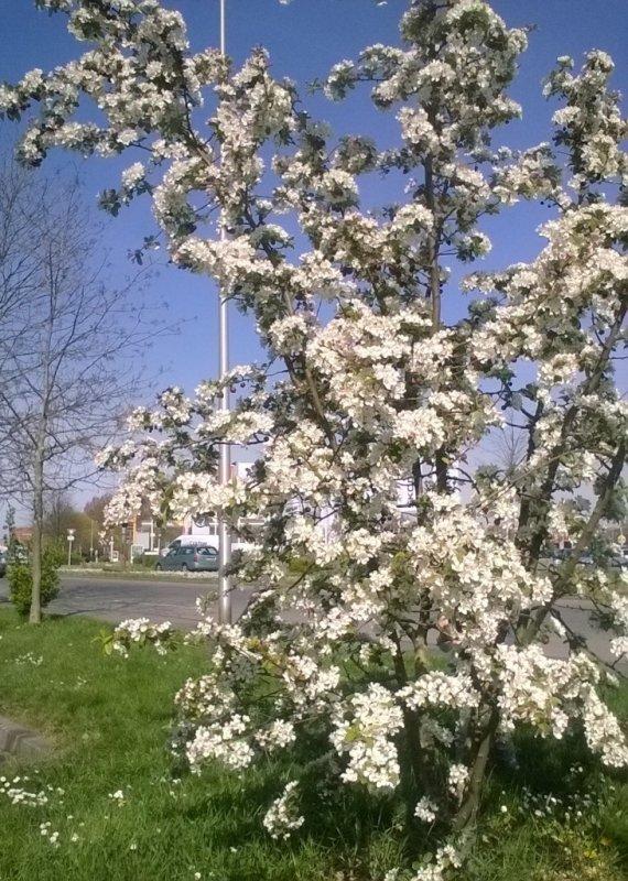 La douceur du printemps