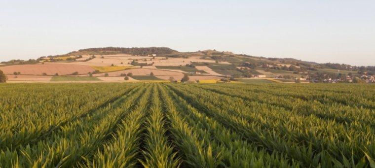 OGM : le Gouvernement salue l'interdiction de mise en culture du maïs génétiquement modifié