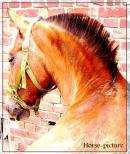 Photo de horse-picture