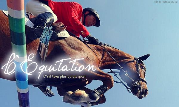 L'équitation c'est bien plus qu'un sport ! ♥