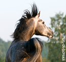 Photo de art-of-horses