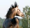art-of-horses