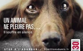 Un animal ne pleure pas... Il souffre en silence   reguarder!!!!!!!!!!!!!!!!!!