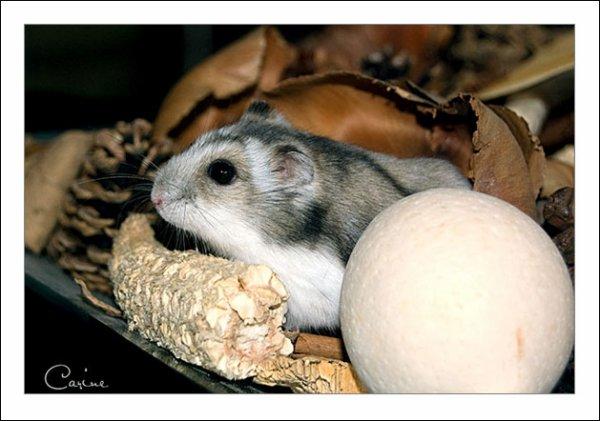 je vous presente Ratatouille