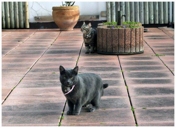 Notre Thai sur la Terrasse